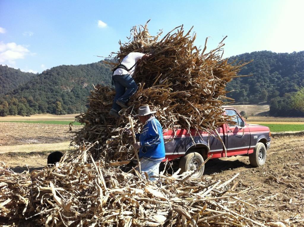 Zemědělský projekt v Mexiku